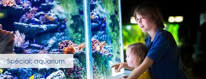 Tubes fluorescents pour aquarium et plantes t5 et t8 for Tube neon aquarium